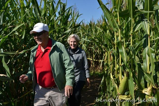 corn maze 057