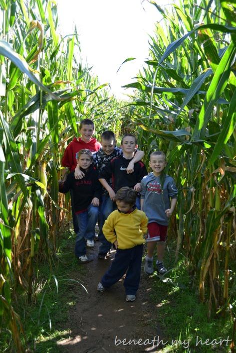 corn maze 060