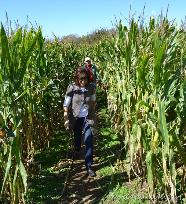 corn maze 066
