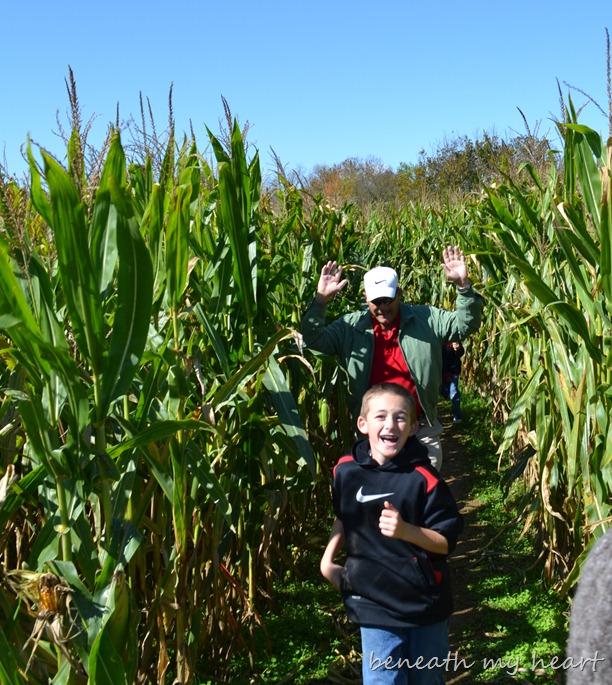 corn maze 067
