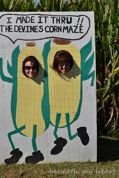 corn maze 074