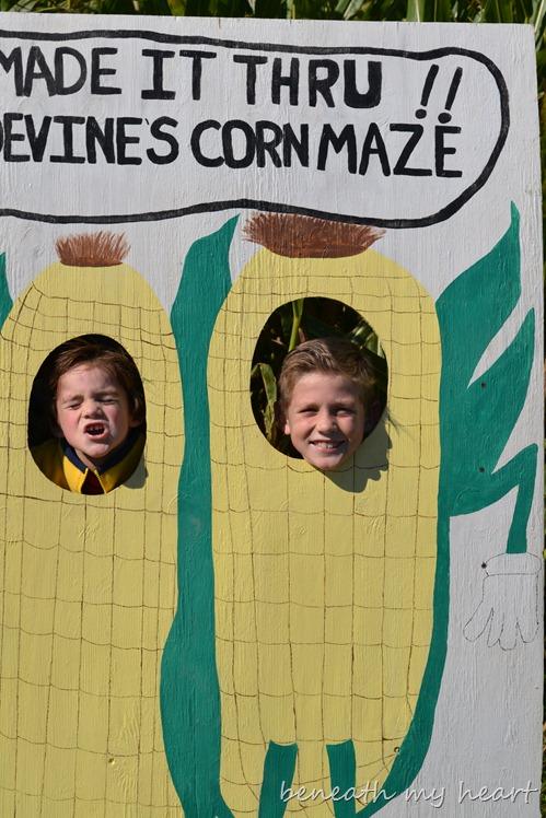 corn maze 075