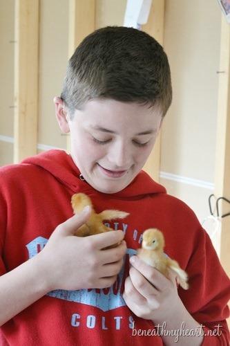 chicks 026