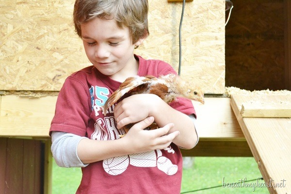 chicks 072