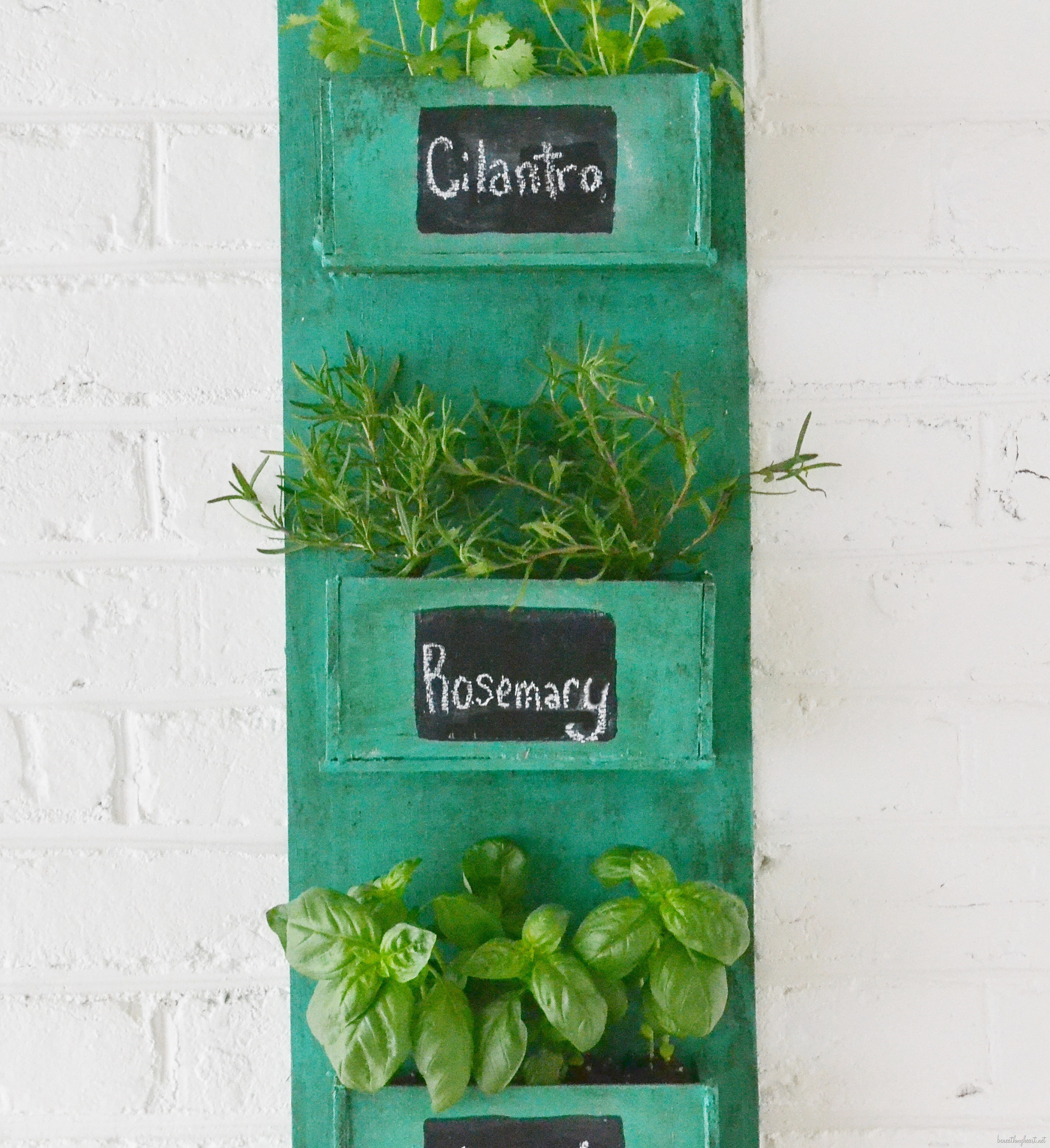 diy herb holder