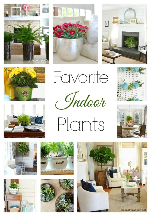 favorite indoor plants