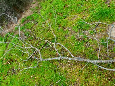 branch on ground